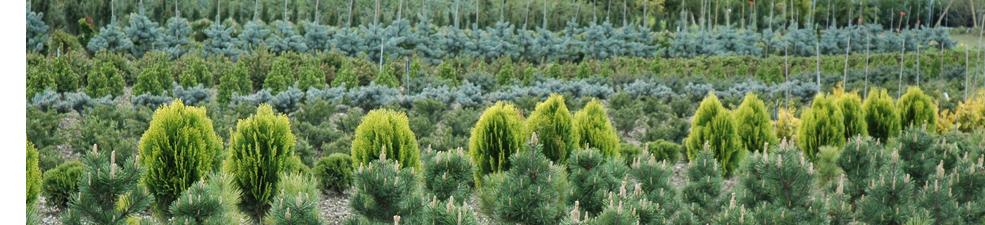 Kunz Bäume und Pflanzen AG